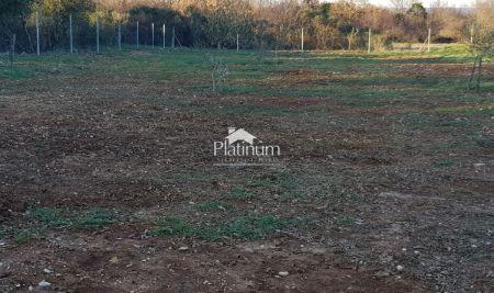 Istra, Ližnjan, Šišan, neurbanizirano zemljište 1000 m2 sa maslinama